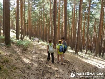 Senderismo entre pinares - viajes a la montaña; tiendas de montaña madrid